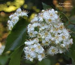 edible native plants pacific northwest 15 trees for a wildlife friendly edible landsape