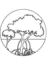 Coloriage arbres de mangrove  img 9469