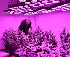 full spectrum light for plants best led grow lights 2018 buyer s guide
