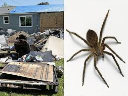 I Tried Killing A Spider - man uses blowtorch to kill spider sets house on fire people com