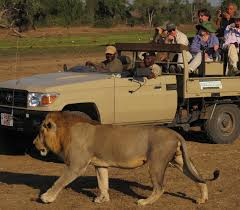 african jeep open heart safari u2014 encounter zambia u0027s wildlife and more