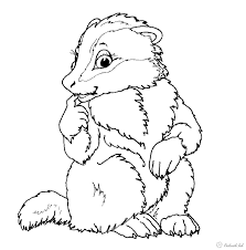 beautiful american badger coloring pages kids aim