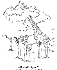 printable giraffe pictures on animal picture society