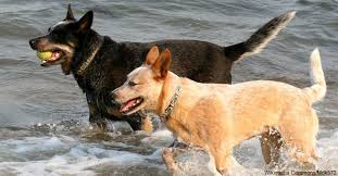 hyperactive dogs the top ten hyperactive dog breeds that require the most extensive