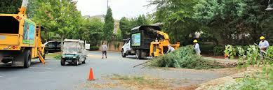 tree removal in alpharetta ga insured and licensed tree