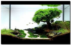 amano aquascape beautifully simplistic aquascape by legendary aquarist takashi