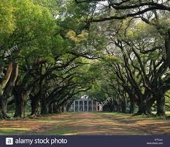 trees along dirt road leading towards country house new orleans