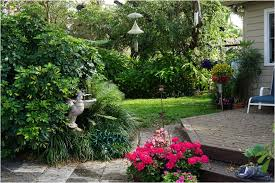 Good Backyard Trees by Shade Trees For The Backyards