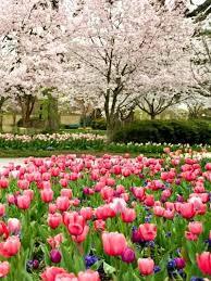 flowers dallas 197 best dallas blooms images on dallas arboretum