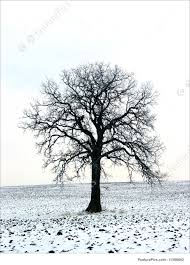 tree in a winter field stock picture i1388662 at featurepics
