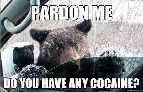 So Much Cocaine Meme - pardon me do you have any cocaine cocaine bear quickmeme