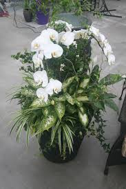large indoor orchid planter container gardening pinterest