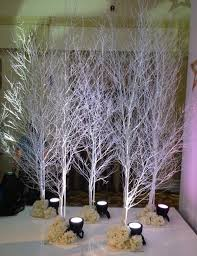 Wedding Trees White Birch Trees Wedding Planner