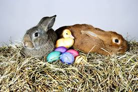 easter bunny what is the easter story top facts about the easter bunny and the