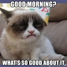 Good Morning Cat Meme - good morning cat meme