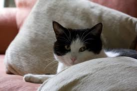 signs of illness in cats the conscious cat