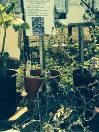 australian native plants for clay soil california native plants garden of delights blog