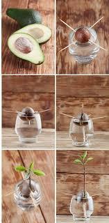best 20 herb planters ideas on pinterest growing herbs 129 best gardening images on pinterest gardening vegetable garden