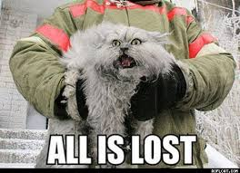 Missing Cat Meme - all is lost cat memes