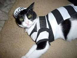 Cat Costumes Halloween 101 Crazy Cat Costumes Images Cat Costumes