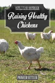 Guide To Raising Backyard Chickens by Types Of Chickens Raising Backyard Chickens Chicken Breeds And