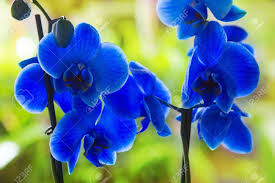 Blue Orchid Flower 100 Orchid Flowers Small Purple Orchid Flower Aa Flowers