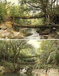 living infrastructure grow it yourself jungle bridges urbanist