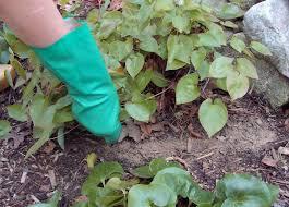vegetable garden sun requirements vegetable gardening basics u2013 betty on gardening