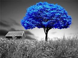 blue tree other nature background wallpapers on desktop nexus