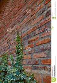 climbing vine on red brick stock photo image 59958554