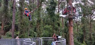 Treetop Canopy Tours by Illawarra Fly Zipline Canopy Tour Touchcloud Global