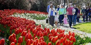 Cheekwood Botanical Gardens Museum Of Art by Cheekwood Free Event Is No Garden Variety Day