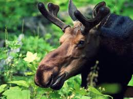 Michigan wild animals images Get to know 8 endangered species in michigan jpg