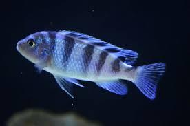 types of aquarium types of aquarium shark fish thegogreenblog