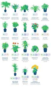 Indoor Plants by Pinterest