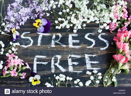 words stress free with spring flowers on a rustic wooden