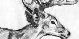 pictures of pencil drawings about nature drawing art u0026 skethes