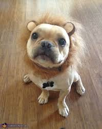 Lion Halloween Costumes Dogs 105 Dog Halloween Costumes Images Dog