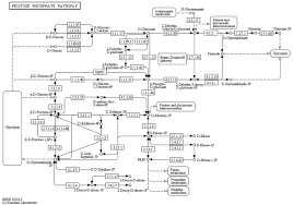 network floor plan layout conversion of kegg metabolic pathways to sbgn maps including