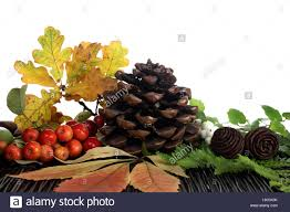 fir cones ornamental apples and foliage tannenzapfen zier pfel