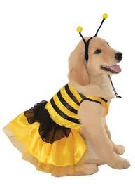 Cheap Dog Costumes Halloween 25 Dog Halloween Costumes Ideas Dog Halloween