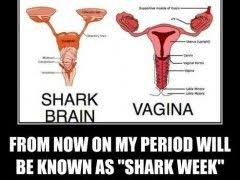 Shark Week Meme - shark week meme shark week meme from now on my period will be