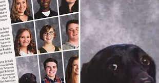 find yearbook photos school includes s dog in yearbook and that s no