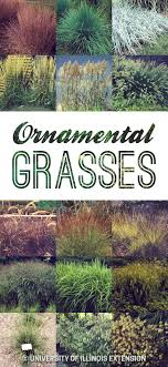 ornamental grasses great for any backyard or landscape