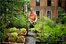 manhattan living rooftop gardens and urban farms in nyc