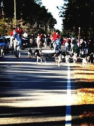 county hounds annual opening day on thanksgiving morning