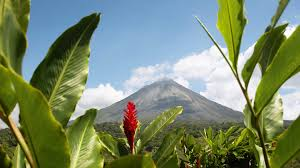 native plants of costa rica costa rica holidays holidays to costa rica 2018 2019 kuoni