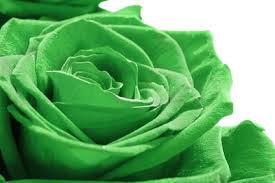 green roses green roses do exist and they are true roses