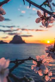 morning blossom wallpapers top 10 sunset spots in europe wallpaper phone and sunset