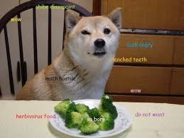Much Wow Meme - 46 best much wow such doge very shibe images on pinterest funny
